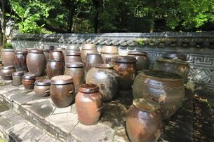 神奈川県 三ツ池公園のコリア庭園の写真素材 [FYI04880784]