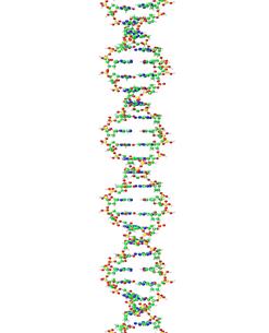 DNA分子のイラスト素材 [FYI04881755]
