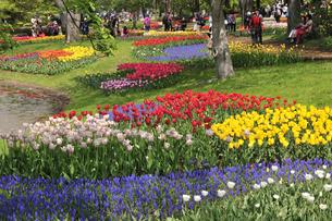 チューリップの咲く公園の写真素材 [FYI04881952]