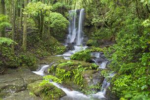 悠久の森 山神の滝の写真素材 [FYI04882347]
