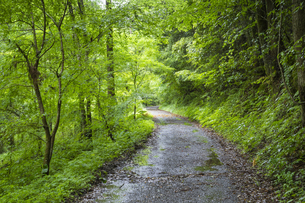 悠久の森 散策道の写真素材 [FYI04882348]