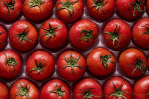 みずみずしいトマトの写真素材 [FYI04882610]