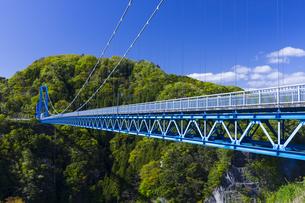新緑と竜神大吊橋の写真素材 [FYI04883110]