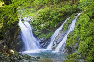 初夏の竜ヶ岩の滝の写真素材 [FYI04883131]
