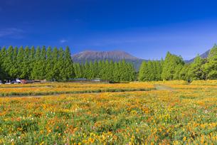 ポピー咲く春の生駒高原の写真素材 [FYI04883139]