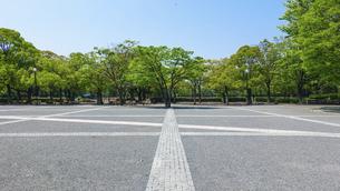 ケヤキの新緑に囲まれた代々木公園イベント広場の写真素材 [FYI04883265]