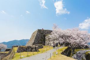 関西の風景 朝来市 春の竹田城跡の写真素材 [FYI04883279]
