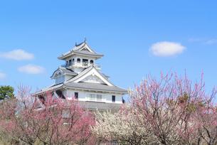 関西の風景 長浜市 早春の長浜城の写真素材 [FYI04883308]