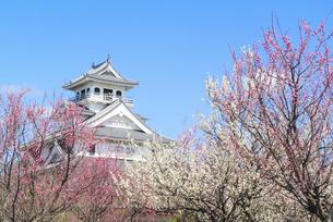 関西の風景 長浜市 早春の長浜城の写真素材 [FYI04883309]