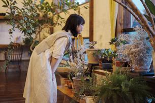 笑顔で観葉植物の様子を見る若い女性の写真素材 [FYI04883387]