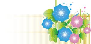 和風の庭で咲く赤と青の朝顔のイラスト素材 [FYI04883519]