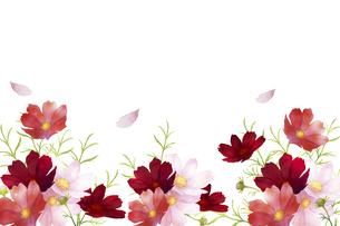 水彩の秋桜のフレームのイラスト素材 [FYI04883642]