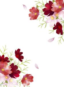水彩の秋桜のフレームのイラスト素材 [FYI04883643]