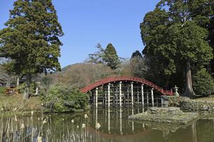 早春の丹生都比売神社の写真素材 [FYI04883761]