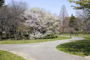春の武蔵野の森公園の写真素材 [FYI04883878]
