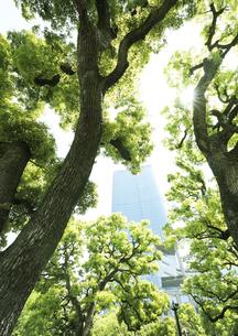 新緑の樹間にそびえる高層ビルの写真素材 [FYI04883887]
