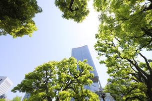 日比谷公園の新緑の樹木と高層ビルの写真素材 [FYI04883888]