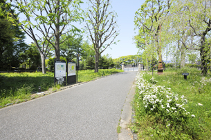 新緑の日比谷公園の遊歩道の写真素材 [FYI04883890]