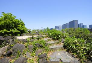 日比谷公園の三笠山の頂上と丸の内の高層ビル群の写真素材 [FYI04883891]