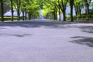 新緑の代々木公園ケヤキ並木の歩道の写真素材 [FYI04883920]