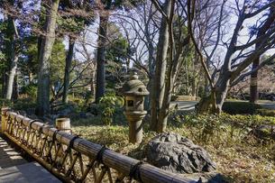 大田黒公園の庭(東京都杉並区)の写真素材 [FYI04884570]