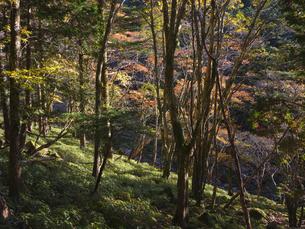 秋の大台ケ原の写真素材 [FYI04884747]
