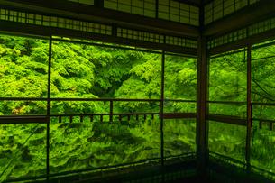 新緑の瑠璃光院の写真素材 [FYI04885029]
