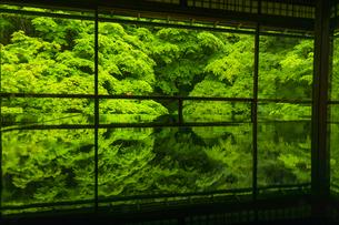 新緑の瑠璃光院の写真素材 [FYI04885032]