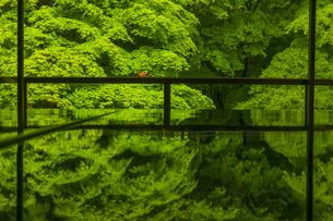 新緑の瑠璃光院の写真素材 [FYI04885036]