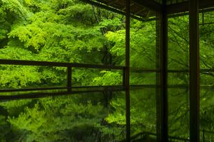 新緑の瑠璃光院の写真素材 [FYI04885055]