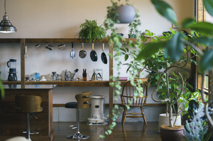 観葉植物のあるおしゃれな空間の写真素材 [FYI04885102]