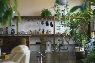 観葉植物のあるおしゃれな空間の写真素材 [FYI04885103]