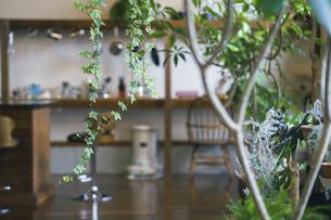 観葉植物のあるおしゃれな空間の写真素材 [FYI04885105]