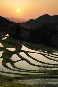 大山千枚田の夜明け 千葉県の写真素材 [FYI04885396]