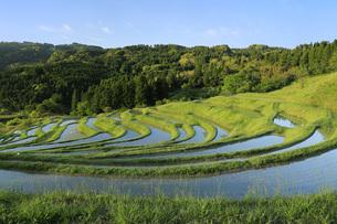 朝の大山千枚田 千葉県の写真素材 [FYI04885399]