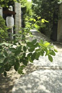 鎌倉宝戒寺の参道の写真素材 [FYI04885477]