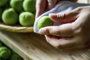 Drying Japanese apricots with white cloth. Ume Shigoto,Japanese plum preparation.の写真素材 [FYI04885732]