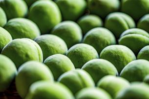 Japanese apricot. Ume Shigoto,Japanese plum preparation.の写真素材 [FYI04885757]