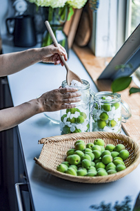 Making Japanese apricot syrup and liqueur. Ume Shigoto,Japanese plum preparation.の写真素材 [FYI04885767]