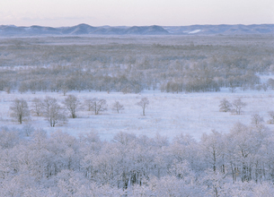 冬の釧路湿原(北海道・標茶町)の写真素材 [FYI04886187]