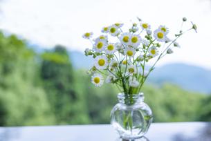 アウトドアで野の花を生けるの写真素材 [FYI04886638]