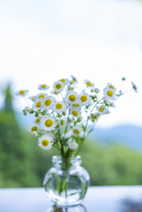 アウトドアで野の花を生けるの写真素材 [FYI04886639]