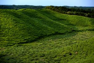熊本県 箱石峠の放牧の写真素材 [FYI04886695]