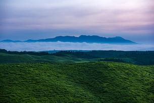 熊本県 箱石峠より雲海に浮かぶ九重連山を望むの写真素材 [FYI04886908]