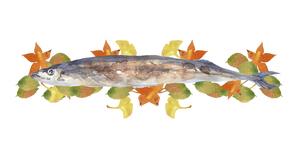 秋刀魚と紅葉の水彩画のイラスト素材 [FYI04887034]