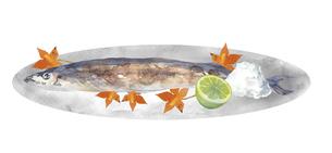 秋刀魚と紅葉の水彩画のイラスト素材 [FYI04887035]