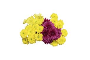 菊の花束の写真素材 [FYI04887788]