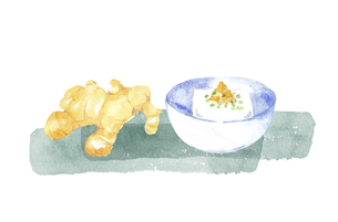 ショウガと豆腐の水彩画のイラスト素材 [FYI04887872]