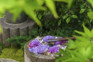 神社の花手水の写真素材 [FYI04887880]
