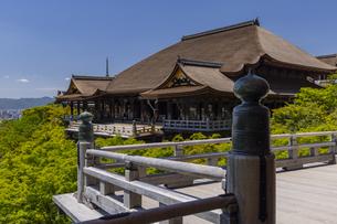 新緑の清水寺の写真素材 [FYI04887966]